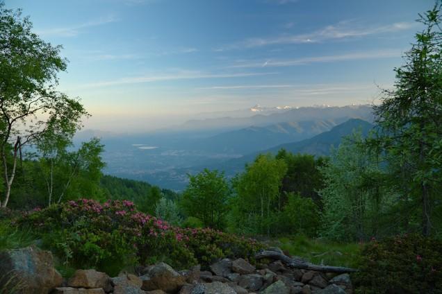 panorama rododendro